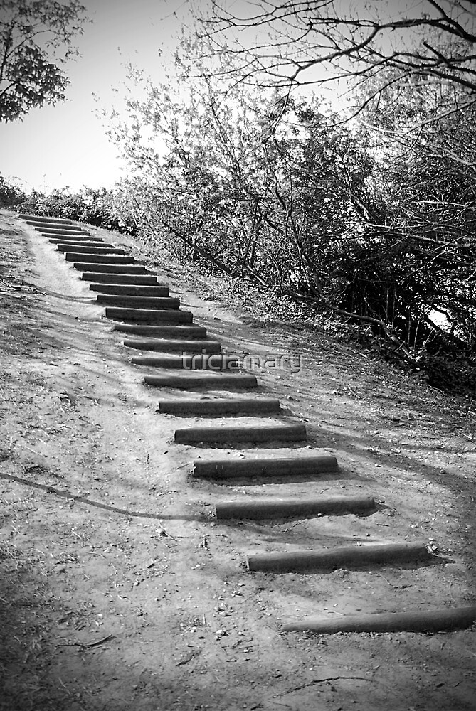 Quot Hillside Steps Quot By Triciamary Redbubble