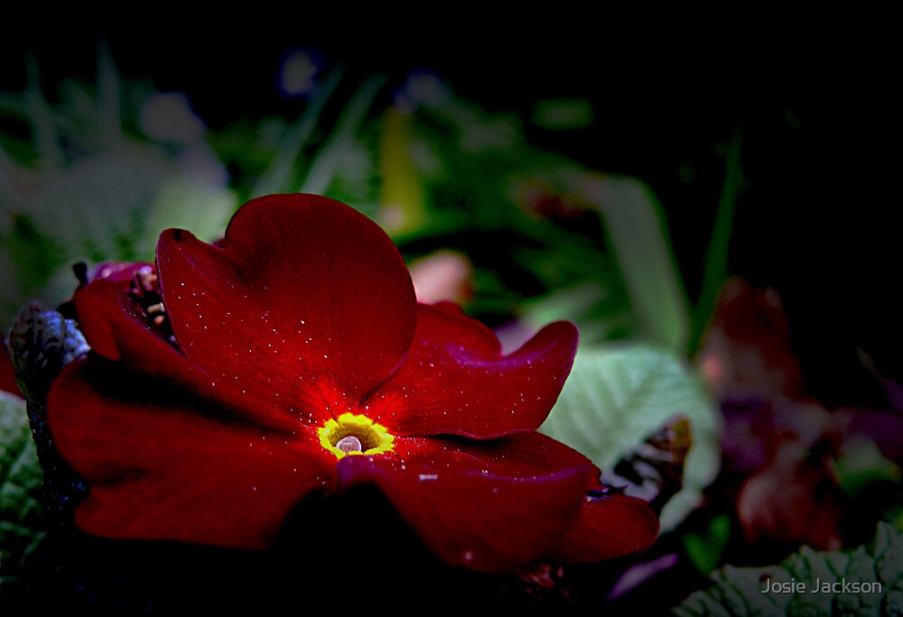 The Beauty of Nature by Josie Jackson