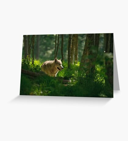 Timberwolf in Forest  Greeting Card