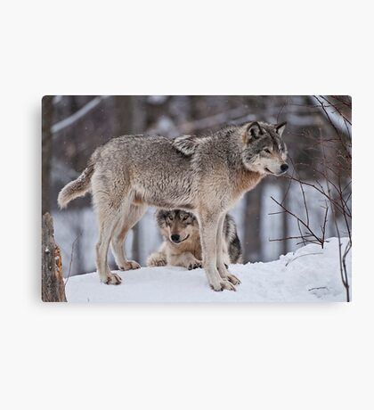 Site Seeing Canvas Print