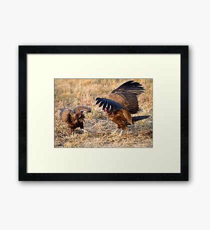Hooded Vulture Dispute Framed Print