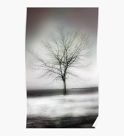 winter shore Poster