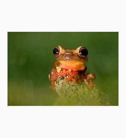 The Clown frog Photographic Print