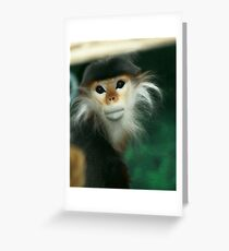 Red-shanked douc langur  Greeting Card