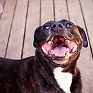 Nothing Like a Bully Smile by Josie Eldred