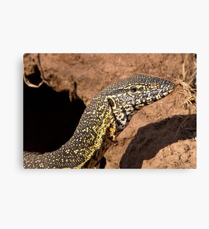 Nile Water Monitor Close Up Canvas Print