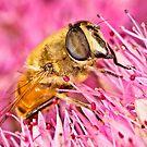 Pollination 16 by Gareth Jones