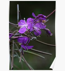 Forest flower in autumn Poster