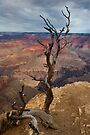 Grand Canyon National Park Old Tree by photosbyflood