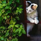 Curious Kitty! by Heather Friedman