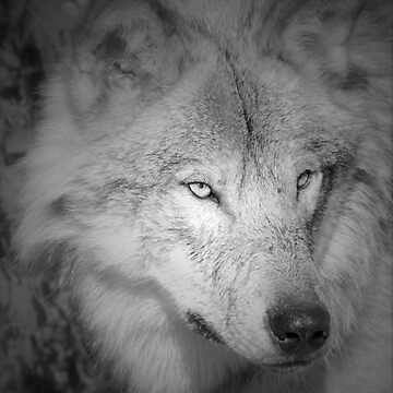 Wolf in Black and White by MitchM