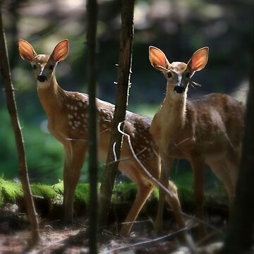 Fawns by MitchM