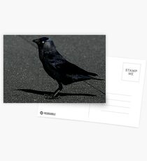 The Jackdaw Postcards