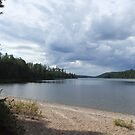 Watching The Storm Move, From The Beach At McManus Lake, Algonquin Park by Tracy Wazny