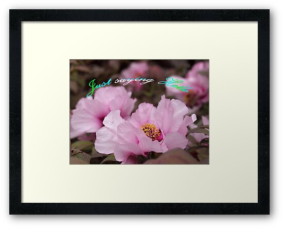 Pink Tree Peonies  by Bev Pascoe