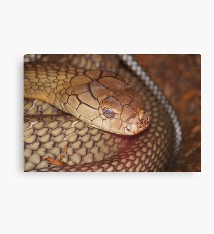 You Are Too Close! Canvas Print