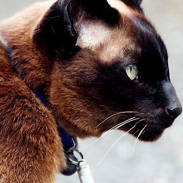 Culross Cat by simpsonvisuals