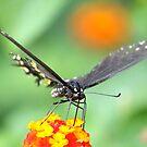 Can i reach nectar? by vasu