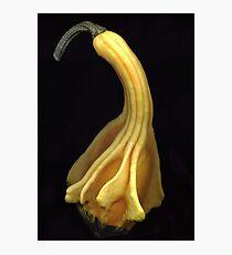 Yellow Gourd Photographic Print