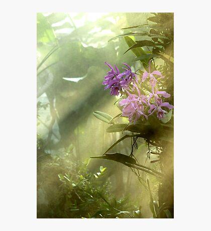 Rainforest! Photographic Print