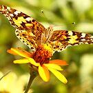 Wings! by vasu