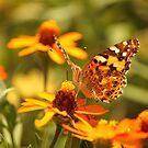 Butterfly! by vasu