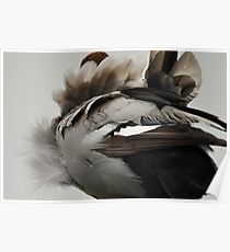 Duck Down - Feather Detail Poster