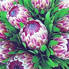 Proteas >> by JuliaWright