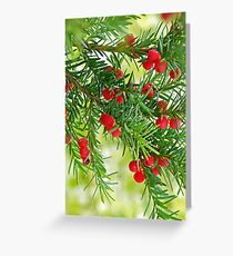 Christmas Berries Greeting Card