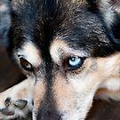 Innocent Eyes by Josie Eldred