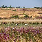 Fields of Purple and Gold - Fouta Djalon, Guinea by helenlloyd
