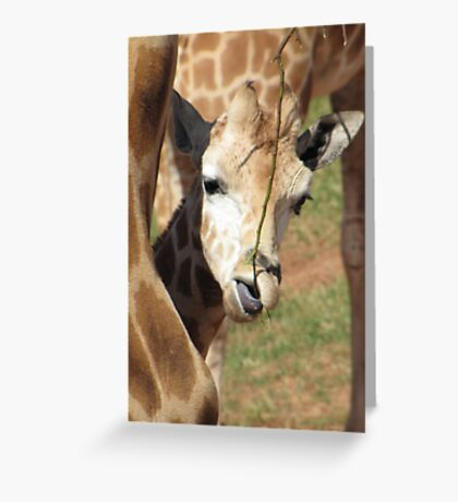 Giraffes - portrait of a child Greeting Card