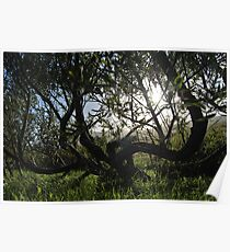 the willow trees Poster