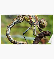 Flexing Dragon Poster
