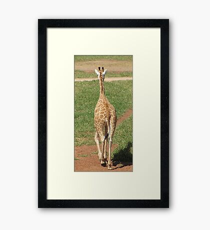 Giraffes - see ya later alligator Framed Print