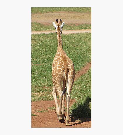 Giraffes - see ya later alligator Photographic Print