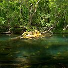Wallaby Creek pool, Home Rule,FNQ by Susan Kelly