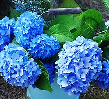 Wedding Hydrangeas by Marjorie Wallace