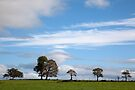 Tree Line Horizon by SteveMG