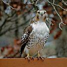 Just Birds by Karen  Helgesen