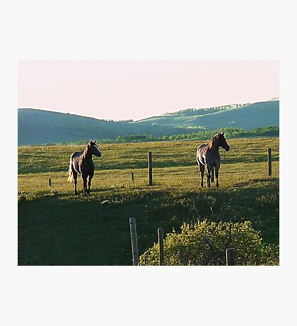 Horses at Sunset Photographic Print