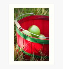 Apple Picking  Art Print