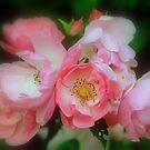 Old Country Rose by jules572