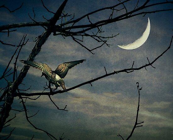 Mourning Dove... by Karen  Helgesen