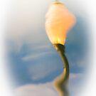 Dali Lampa by Tom Vaughan