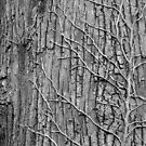Tree and Vines B&W by elasita