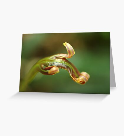 new life in the forest Greeting Card