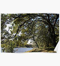 Under The Giant Spreading Oak Trees Poster