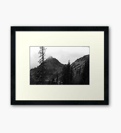 Dead Tree at Chinook Framed Print