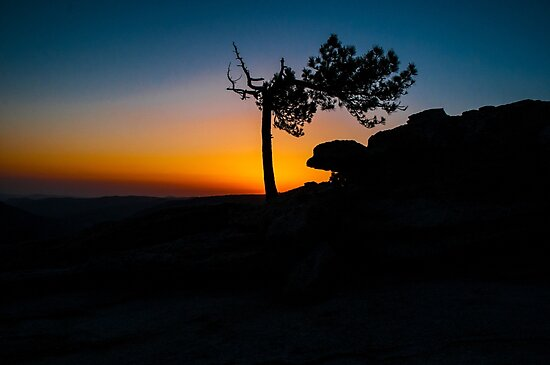 **** LONESOME PINE **** by RGHunt
